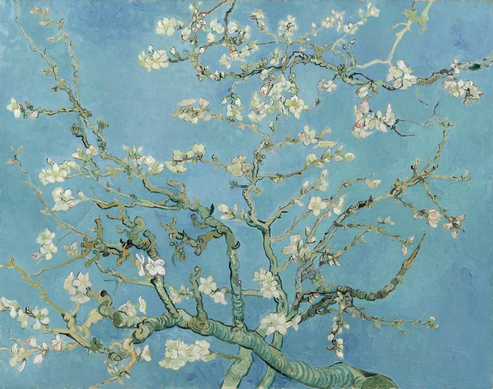 vincent van gogh the paintings blossoming almond tree